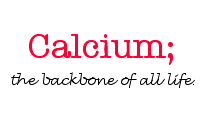 calcium and bones