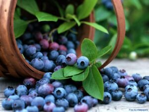 Blueberries benefit eyes